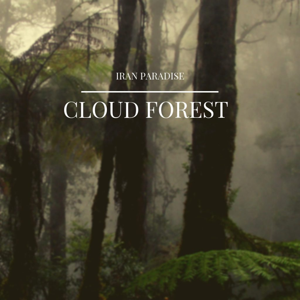 Jangal-e Abr (Cloud Forest)