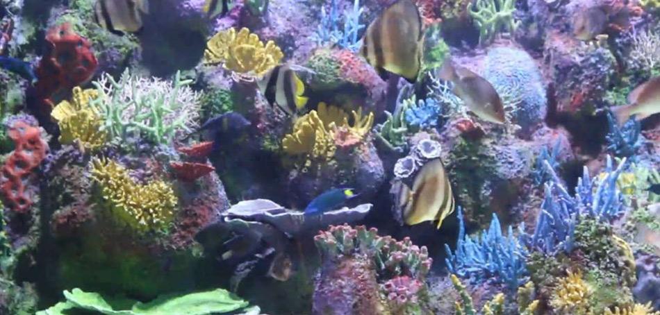 Anzali-Aquarium