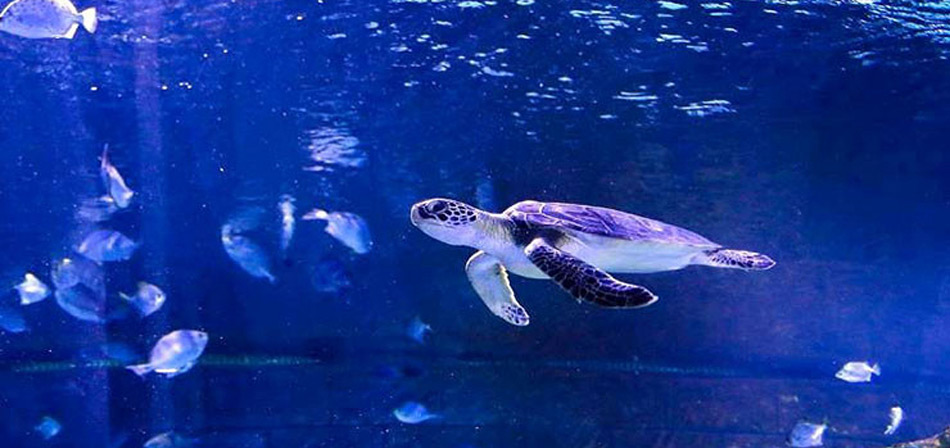 Aquarium-Anzali