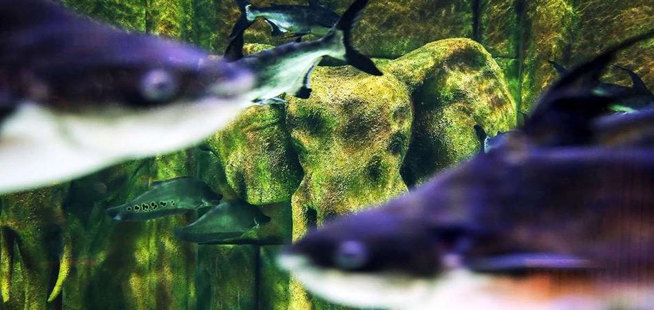 aquarium-iran