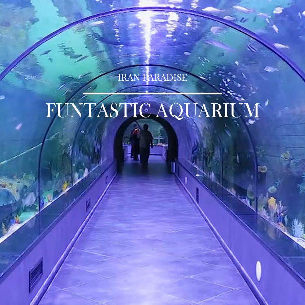 fantastic-aquarium