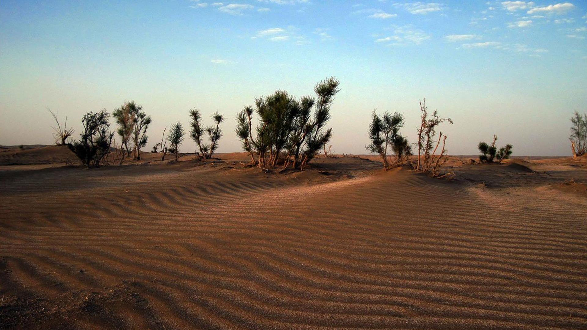 abouzeid-abad-desert