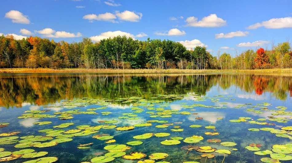 anzali-lagoon